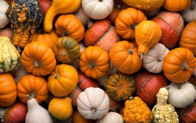 10 Northern Michigan Pumpkin Patches  (& Corn Mazes, too!)
