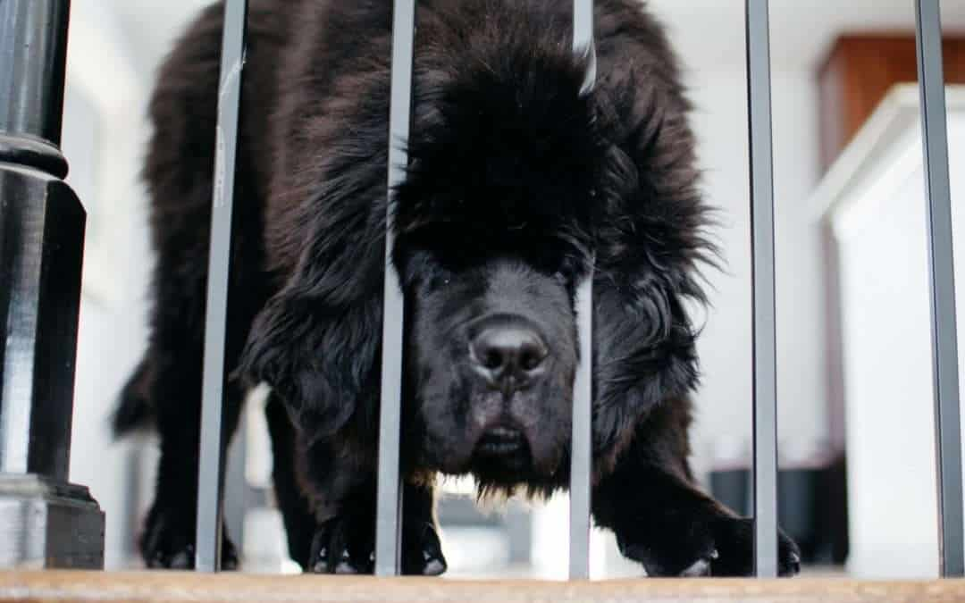 New Dog Profiles + Lots of New Newfie Pictures!