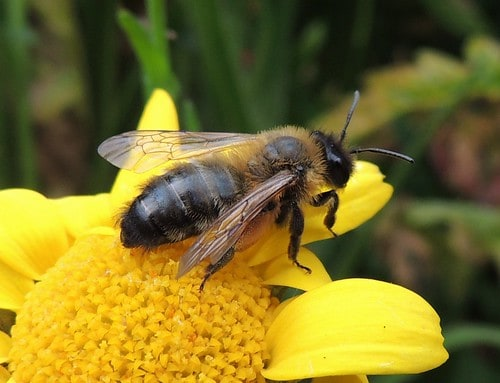 how to keep bees away from pool this summer