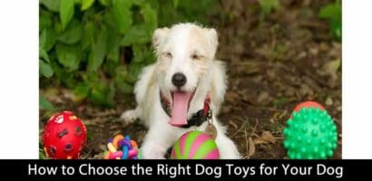 How to Choose the Right Dog Toys for Your Dog