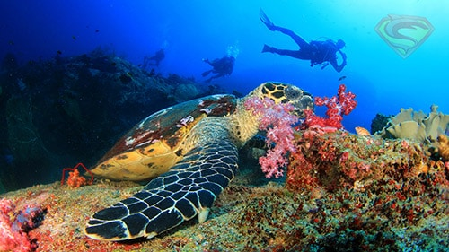 Phuket dive tours with small group sizes