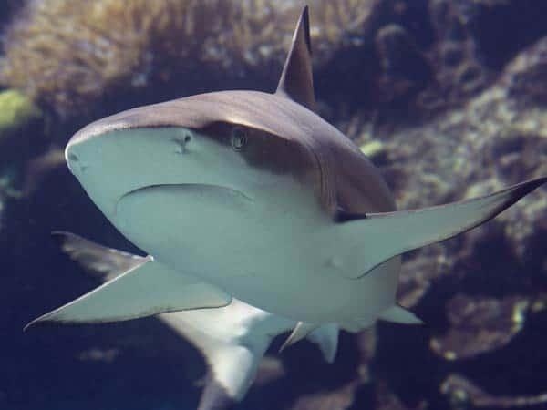 PADI Specialty Dive Courses Phuket