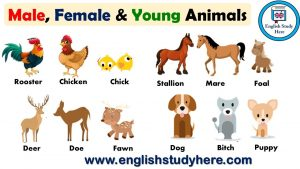 gendered language for animals