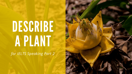 Describe a Plant or Flower [IELTS Speaking]