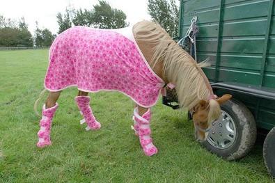 horse-in-pink-clothing.jpg
