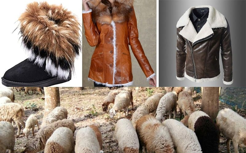 California Becomes The First State In The US To Ban Animal Fur Products
