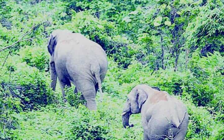 Dhaka will be received 64 new animals in exchange of two elephants from Egypt