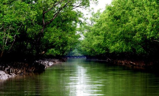 Tourism was banned in the Sundarbans due to Covid – 19 Coronavirus