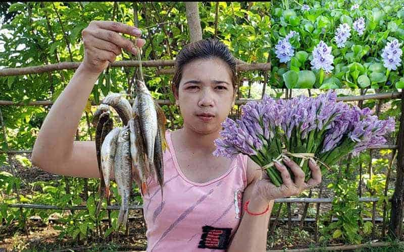 The effectiveness of Water Hyacinth as human food