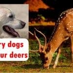 Hungry dogs ate four deers