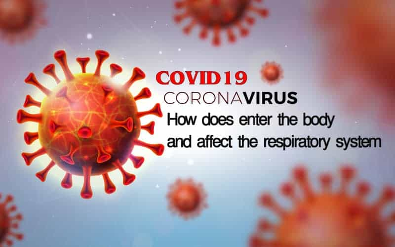 How COVID19 Coronavirus does enter the body and affect the respiratory system?