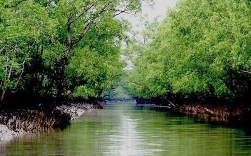 Super Cyclone Amphan Fortunately, the Sundarbans Is not Damaged Massively