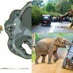 Human Elephant Conflict Accelerating Biodiversity Decline