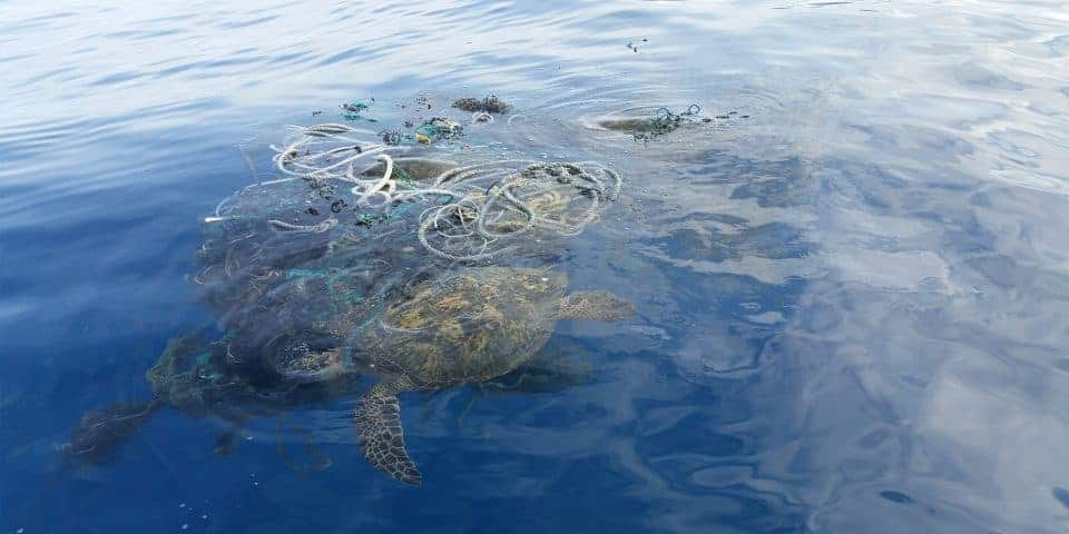 Turtles Trapped in Nets on The Cox's Bazar Sea Beach