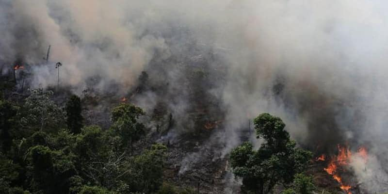 Thousands of volunteers are fighting against the wildfire to save the Amazon rainforest