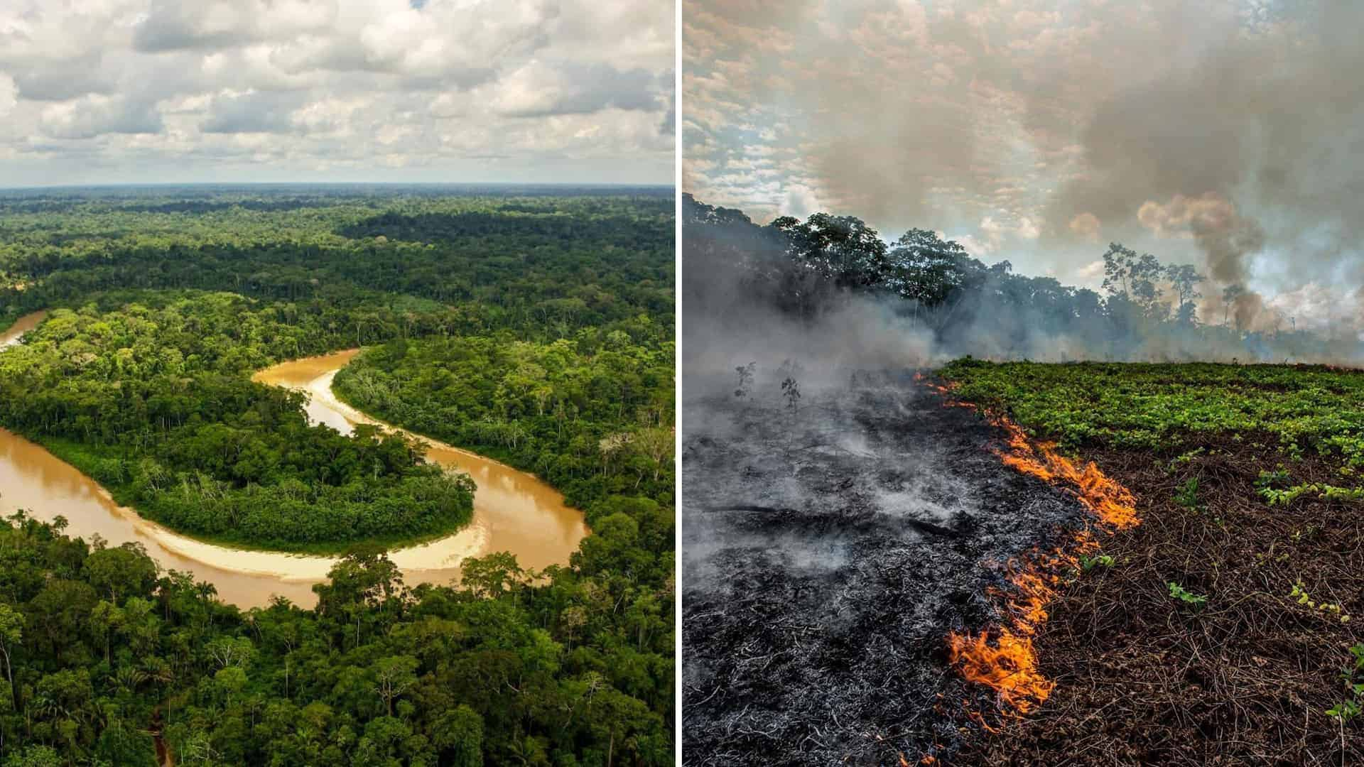 Amazon the largest forest in the world is with the highest destruction