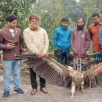 Rare species of vulture rescued in Salanga