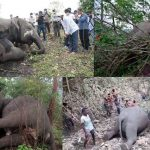 Strange! Eighteen Elephants Died at a time -is it Because of Lightning or the Torture of Poachers