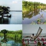 Twenty Thousand trees destroyed in Hakaluki Haor, Bangladesh