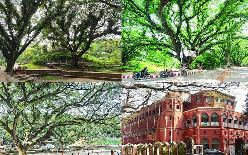 No hospital At CRB, Chattagram is needed by means of chopped trees