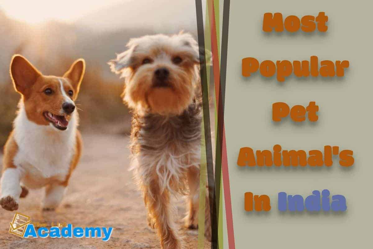 Cover Image For List : 10 Most Popular Pet Animals In India