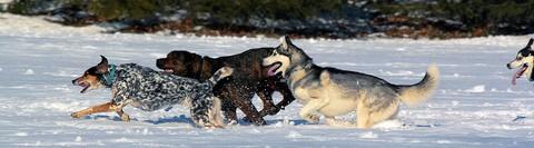 dogs-running-in-snow-by-rengel134.jpg