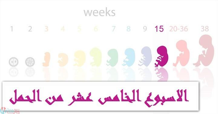 اعراض الحمل في الاسبوع الخامس عشر : كل ما تحتاجي معرفته! 13
