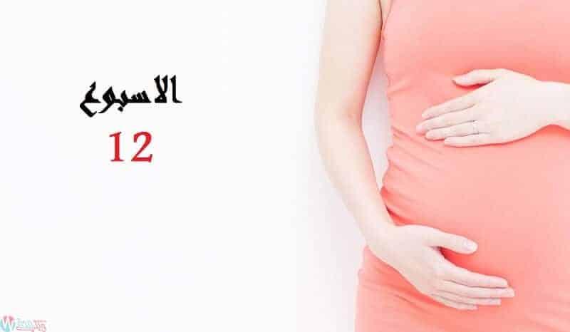 الاسبوع-الثاني-عشر-من-الحمل