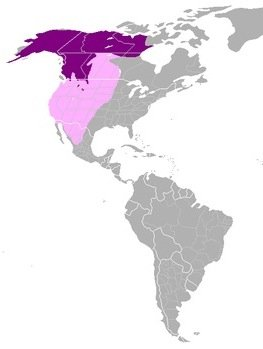 Grizzly Bear Map