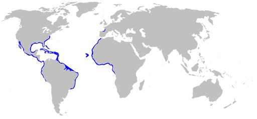 Nurse Shark Map