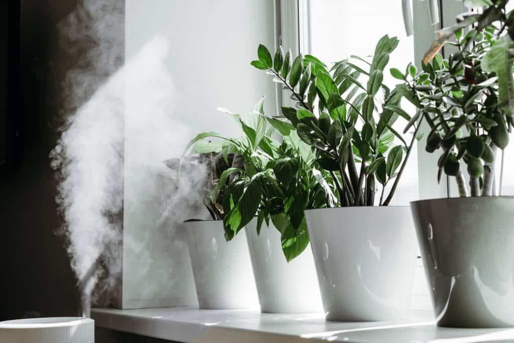 Quelles sont les alternatives pour humidifier votre maison ?