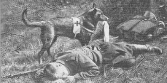 chien sanitaire 1ere guerre mondiale