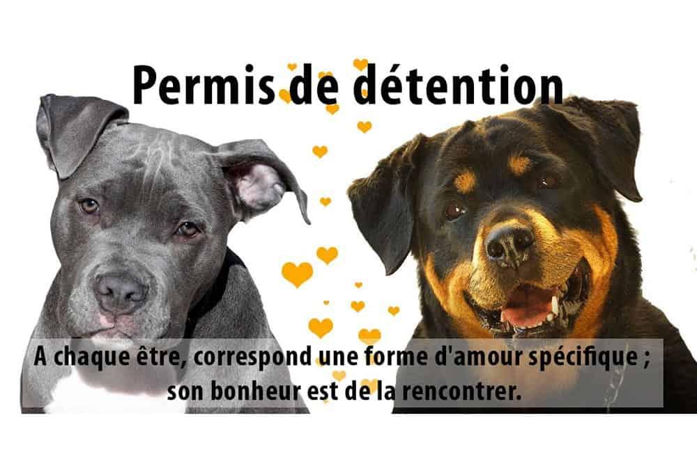 Attestation de détention de chien catégorisé permis chien à Bordeaux