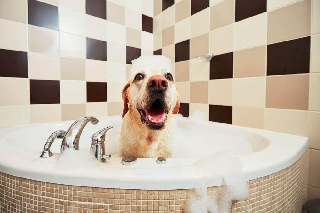 Donner un bon bain à son chien