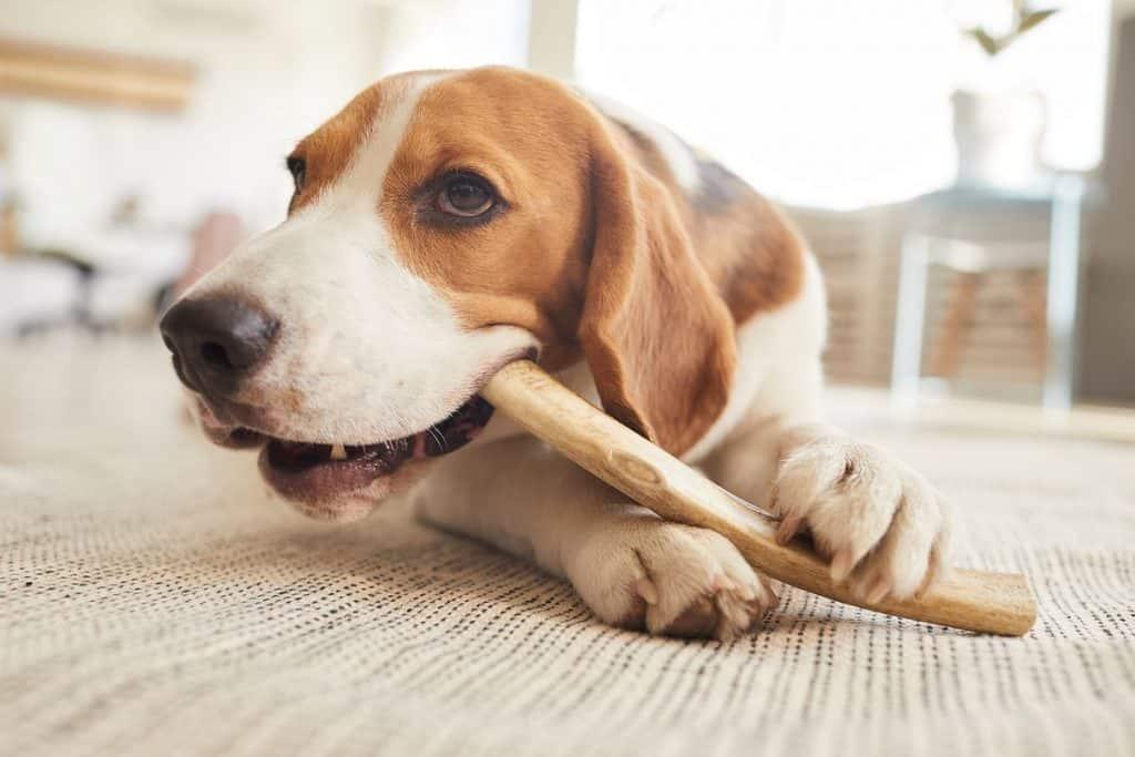 nettoyer les dents de son chien