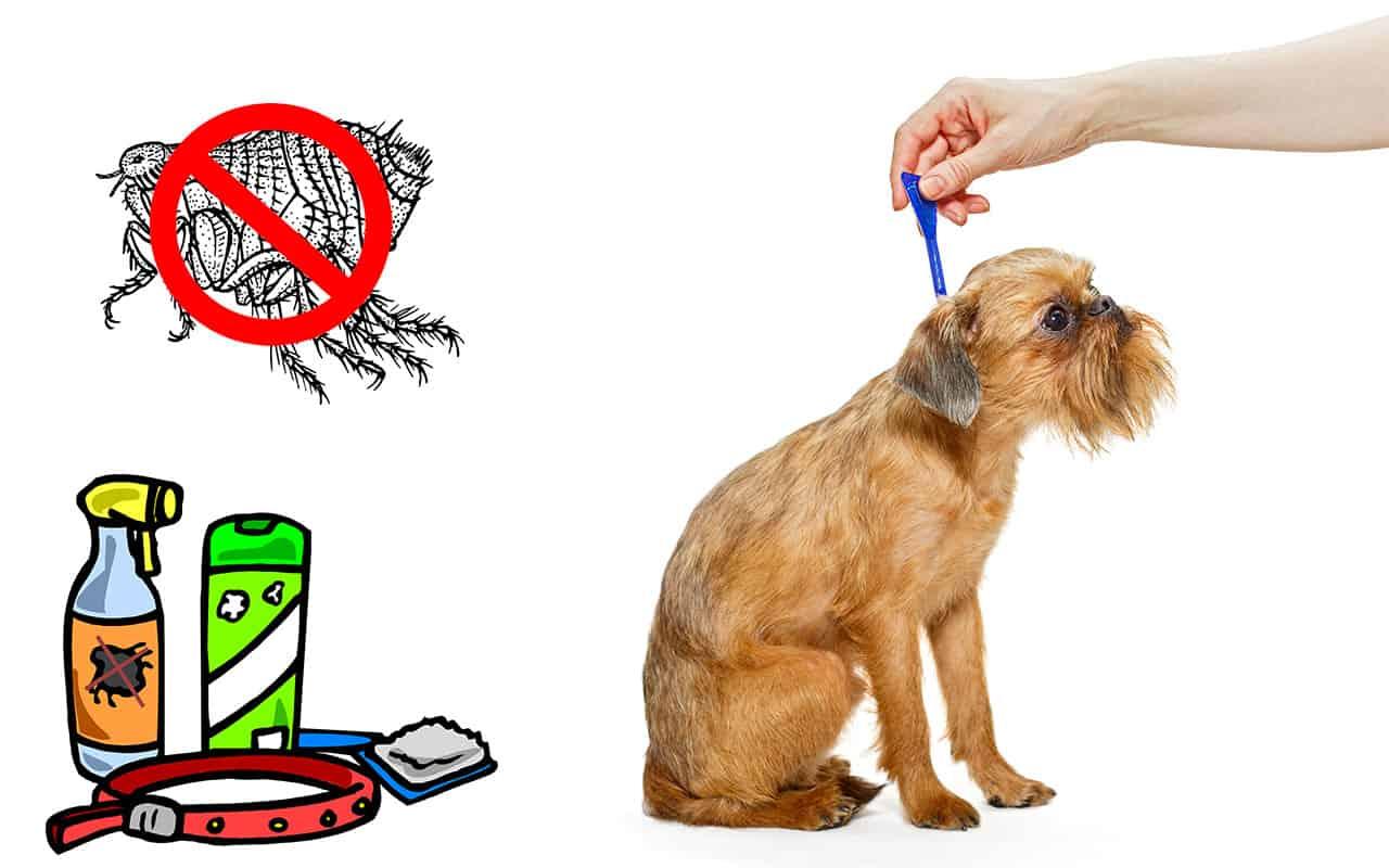 meilleur anti puce pour chien
