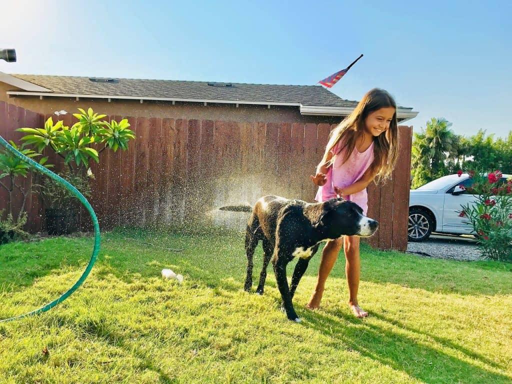 nettoyer son chien dehors au jet d'eau