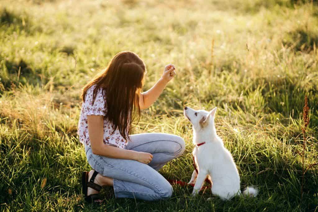 dressage positif chien