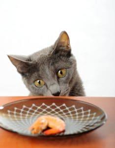 Can-Cats-Eat-Shrimp