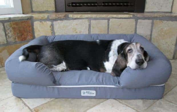 Orthopedic Dog Bed Featured