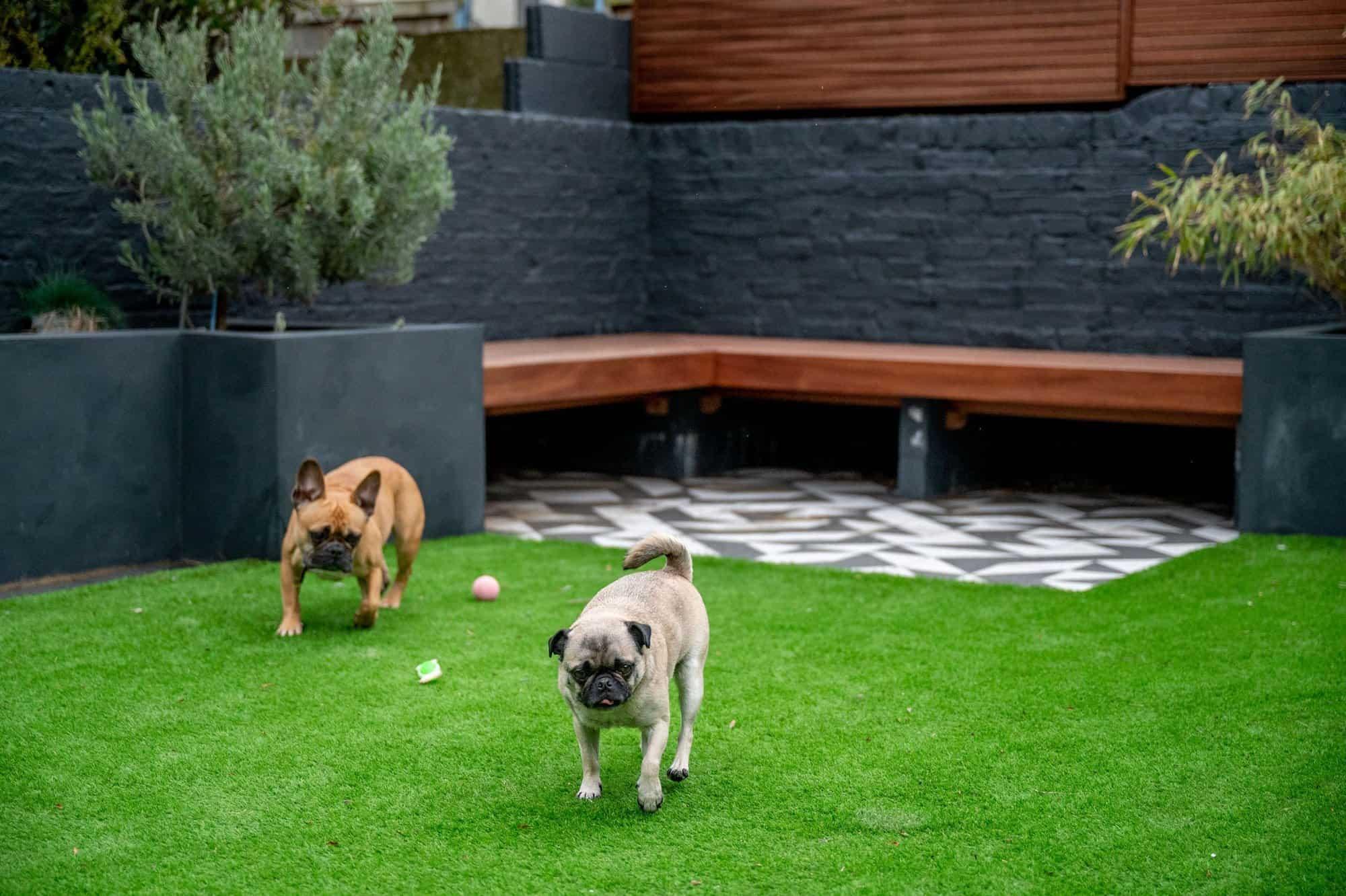 Dogs in Garden
