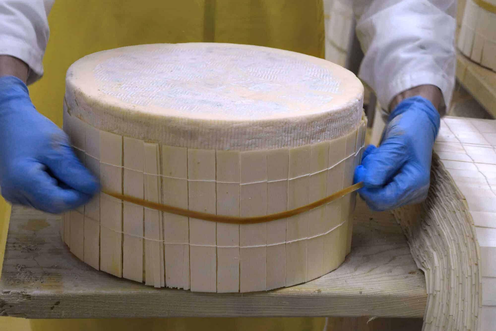Gorgonzola DOP Binding process