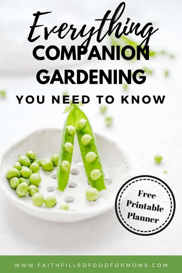 Companion Planting Beginners Garden resource picture of peas