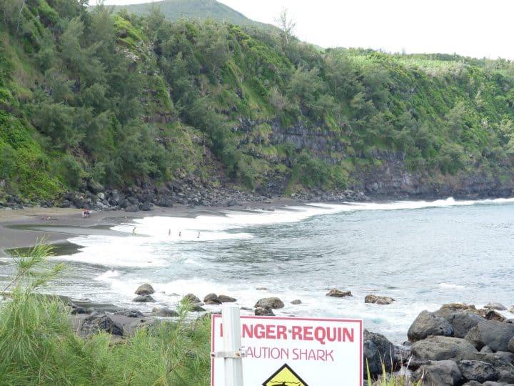 Les dangers occasionnés par les requins de la Réunion