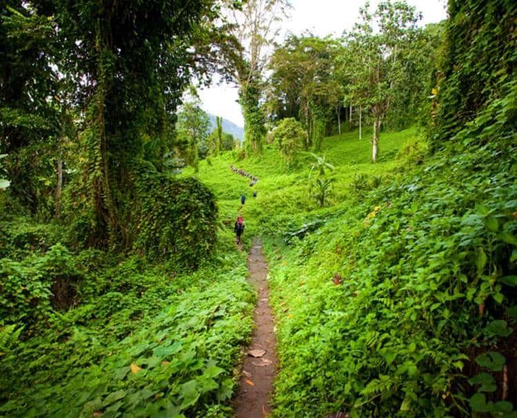 Walking through the Kokoda Track jungle