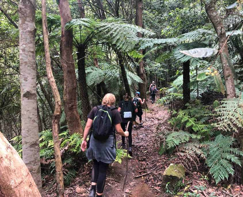 Walking through Nellies Glen on the Six Foot Track
