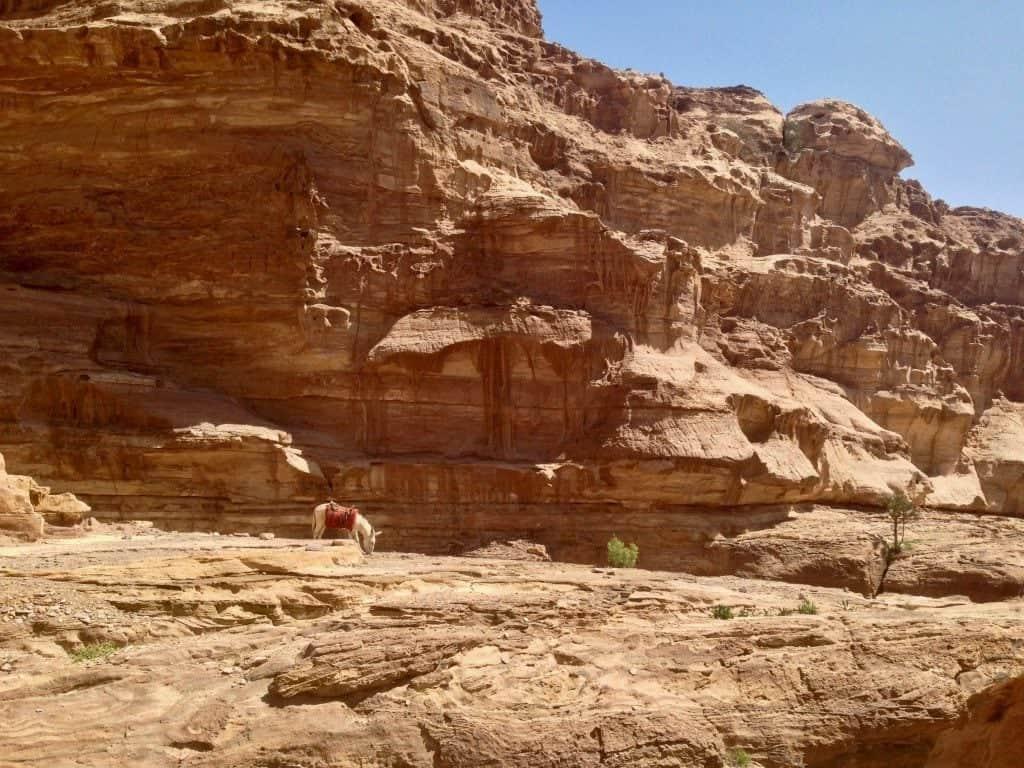 Un asino sotto una parete rocciosa a Petra