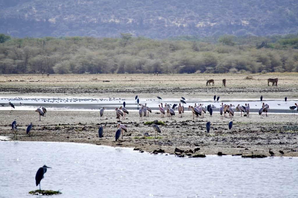 tanzania safari itinerari lake manyara