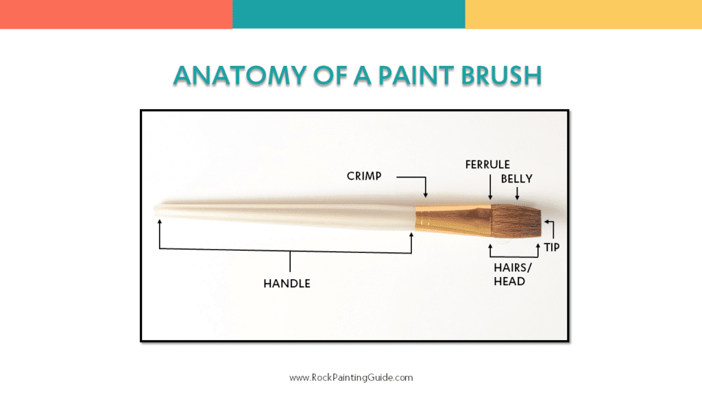 anatomy of a paint brush