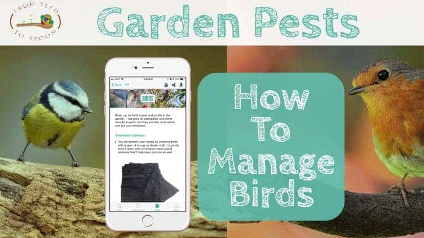Birds blog post